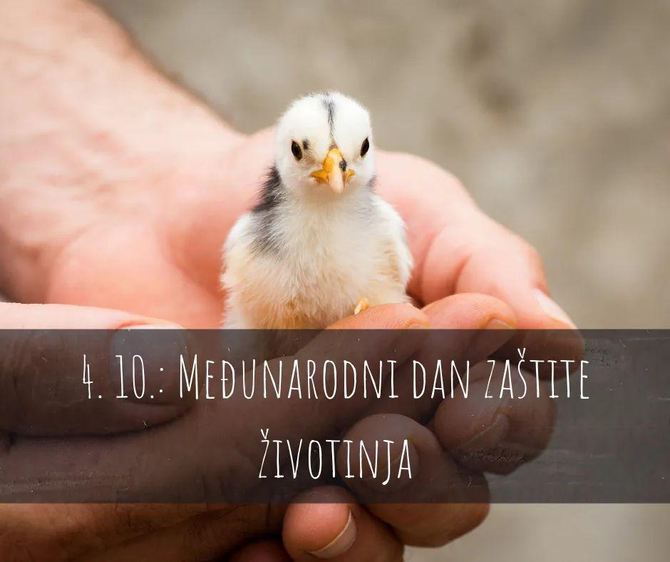 Međunarodni dan zaštite životinja